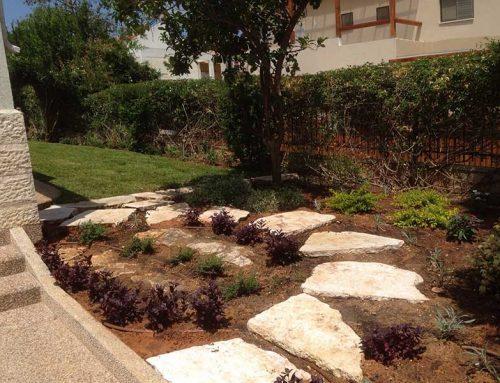 חיפוי קרקע לגינה
