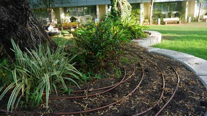 גינון ומערכות השקיה